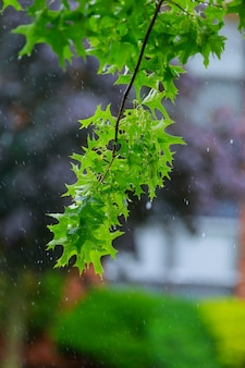 Branche d'arbre avec des gouttelettes d'eau