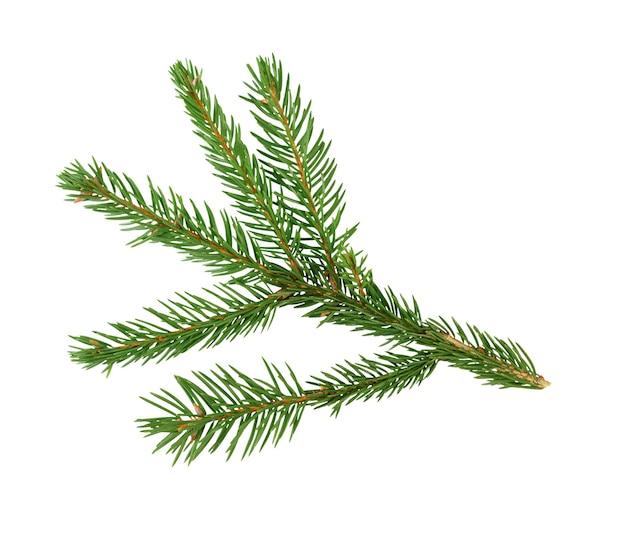 Branche d'arbre de noël épinette verte ou branche de pin avec des aiguilles isolé sur fond blanc