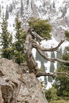 Branche d'arbre séchée sur un rocher dans les montagnes enneigées
