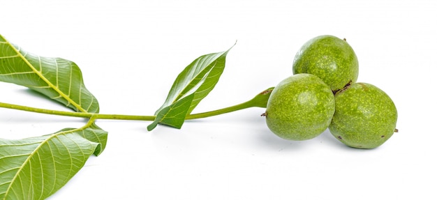 Branche d'arbre vert fruits noix isolé sur fond blanc