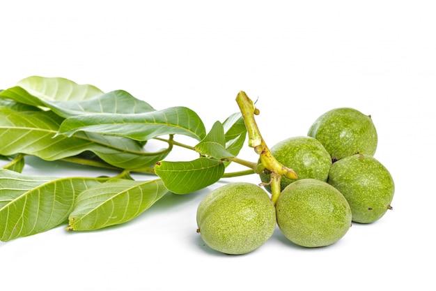 Branche d'arbre vert fruits noix isolé