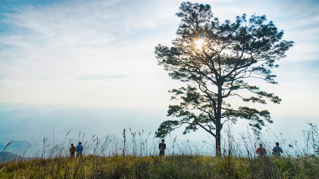 Branche d'arbres silhouette sans feuilles contre ciel nuageux et paysage de verre.