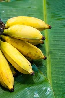 Une branche de bananes jaunes juteuses sur une feuille de bananier vert. fruits juteux mûrs.