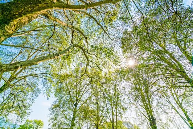 Branche de beaux arbres sur un ciel bleu.
