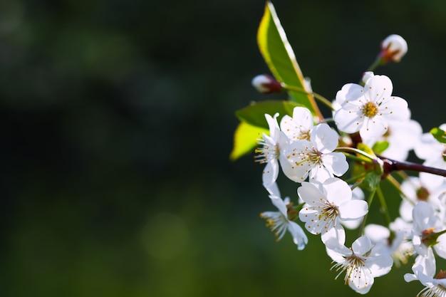 Branche de branche des fleurs contre un fond flou