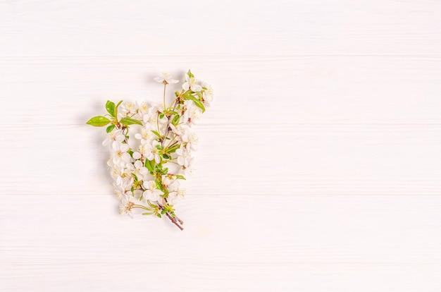 Branche de cerisier en fleurs sur une surface blanche