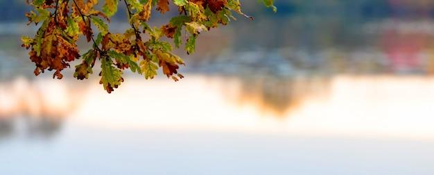 Branche de chêne avec des feuilles colorées près de la rivière, fond d'automne