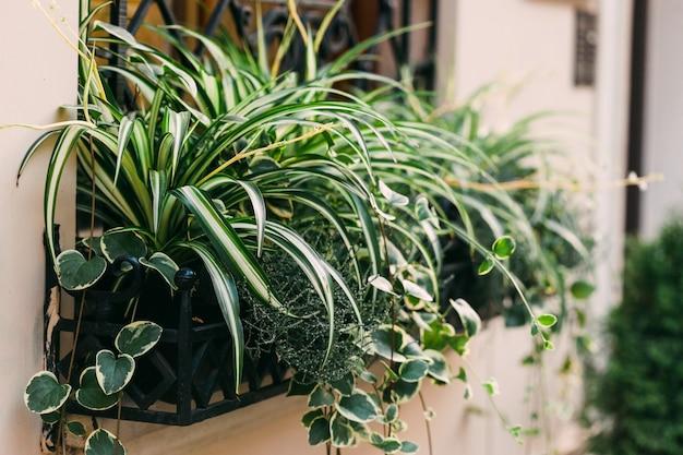 Branche de conifère dans un pot sur la rue. décoration de la fenêtre