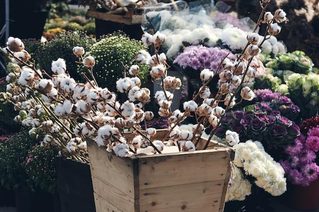 Branche de coton et buissons de chrysanthèmes fleurissent dans un magasin de fleurs. décorations d'automne.