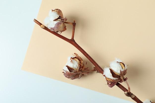 Branche de coton sur deux tons