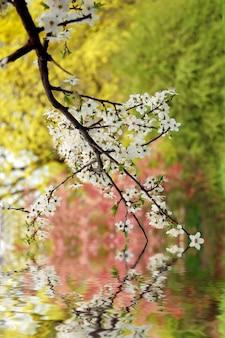 Branche de couleur