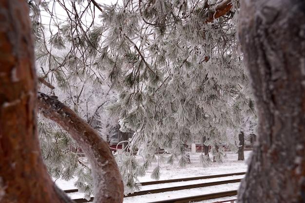Une branche couverte de givre d'un sapin en hiver dans un parc de la ville