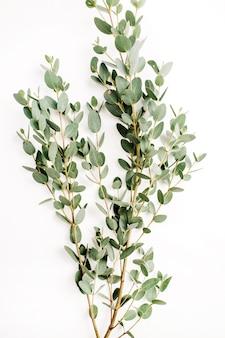 Branche d'eucalyptus sur blanc. fond de fleur minimale. mise à plat, vue de dessus
