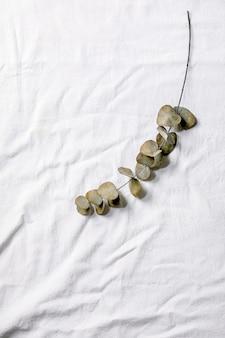 Branche d'eucalyptus feuilles rondes sur fond textile en coton blanc