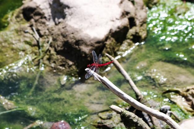 Branche feu odonates monstre mouche