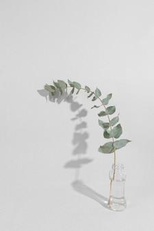 Branche de feuille dans un vase sur table