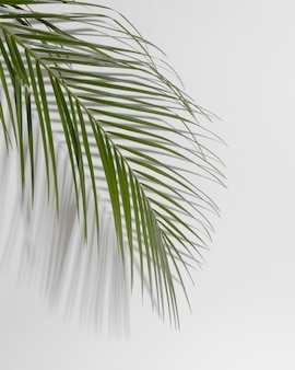Branche de feuille avec ombre se bouchent