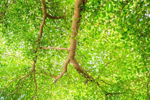 Branche de feuille verte pour fond naturel avec espace