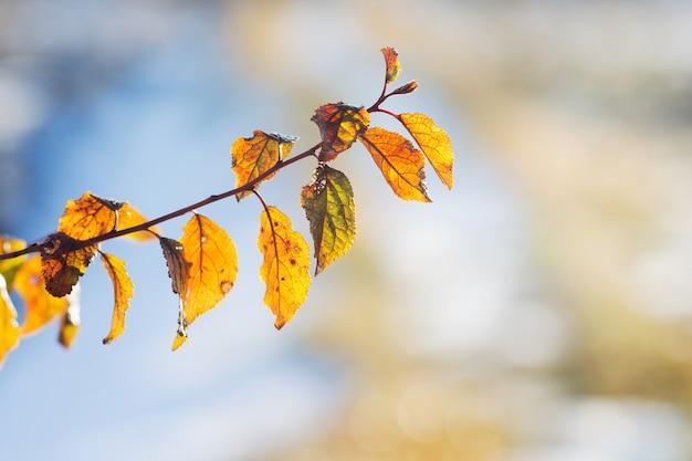 Branche avec des feuilles d'automne jaunes sur une lumière contre le soleil