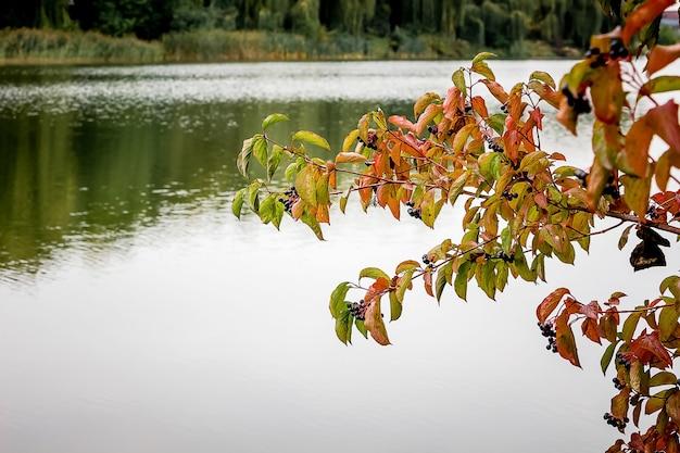 Une branche avec des feuilles sur la rivière, dans laquelle les arbres sont affichés, automne