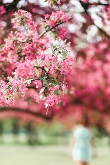 Une branche de fleur de cerisier en fleurs recouvert de fleurs roses