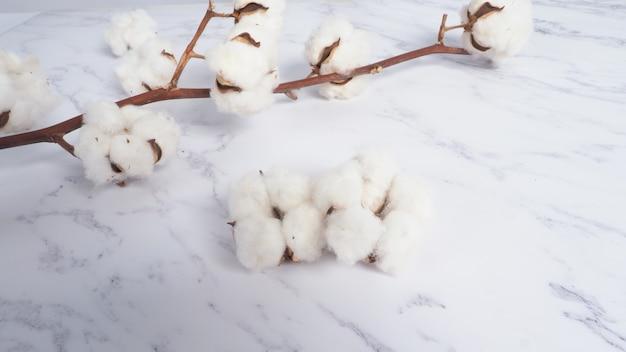 Branche de fleur de coton sur fond de marbre blanc vue de dessus mise en page minimale prise de vue en grand angle en studio