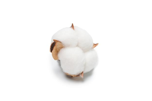 Branche de fleur de coton isolée sur blanc.