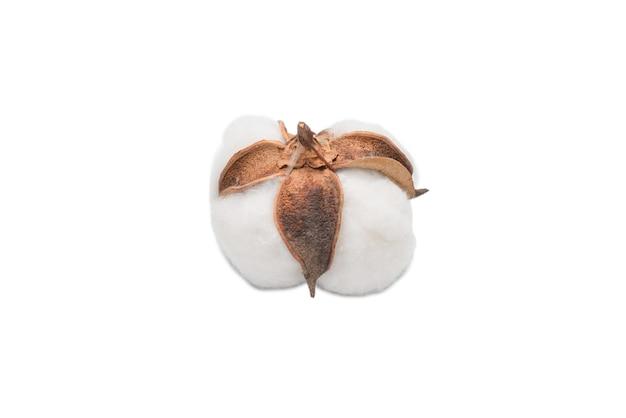 Branche de fleur de coton isolée sur une surface blanche. vue de dessus.