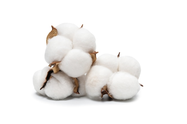 Branche de fleur de coton isolée sur une surface blanche