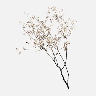 Branche de fleur sèche sur blanc cassé