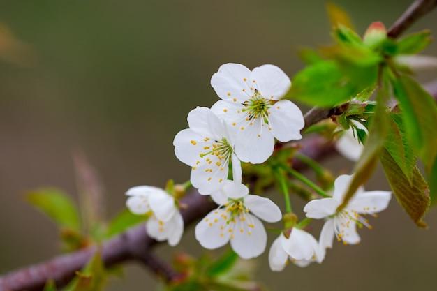 Une branche fleurie de printemps sur fond de ciel bleu.