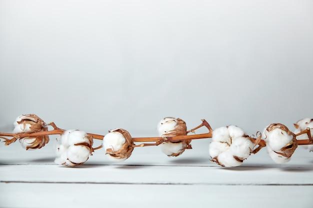 Branche de fleurs de coton doux est allongé sur une table en bois blanc