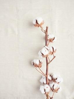 Branche de fleurs de coton naturel sur tissu de coton biologique
