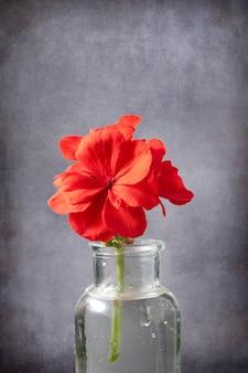 Branche avec des fleurs de géranium rouge dans un vase avec de l'eau et fond vintage