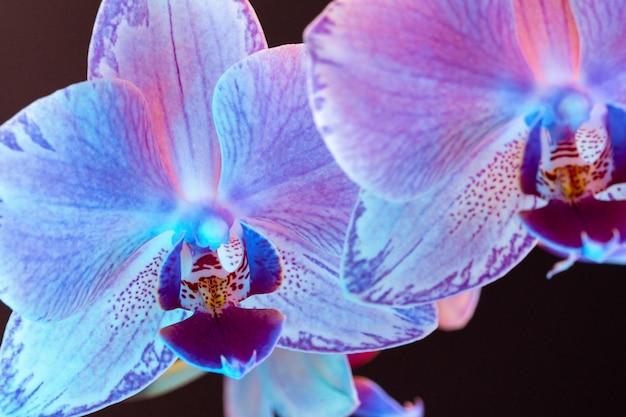 Branche de fleurs d'orchidées en néon bouchent