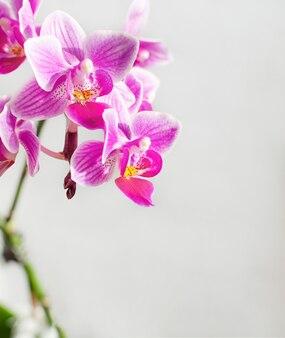 Branche de fleurs d'orchidées roses et violettes.
