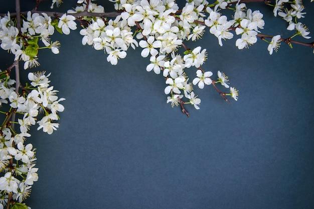 Une branche de fleurs de prunier sur fond sombre
