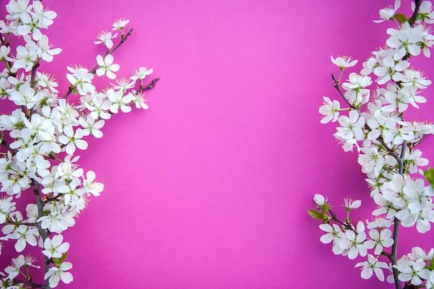 Une branche de fleurs de prunier