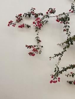 Branche de fleurs rouges, feuilles sur mur de béton beige neutre