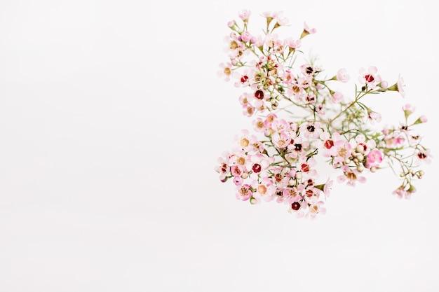 Branche de fleurs sauvages sur fond blanc