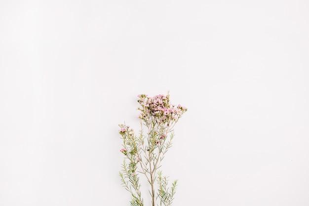 Branche de fleurs sauvages. mise à plat, vue de dessus concept floral de printemps minimal