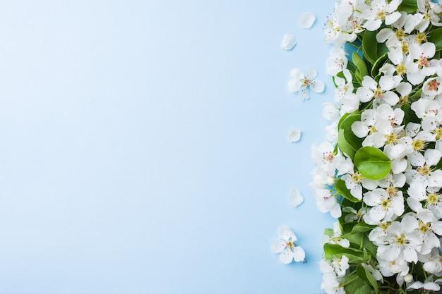 Branche florifère de printemps sur fond bleu