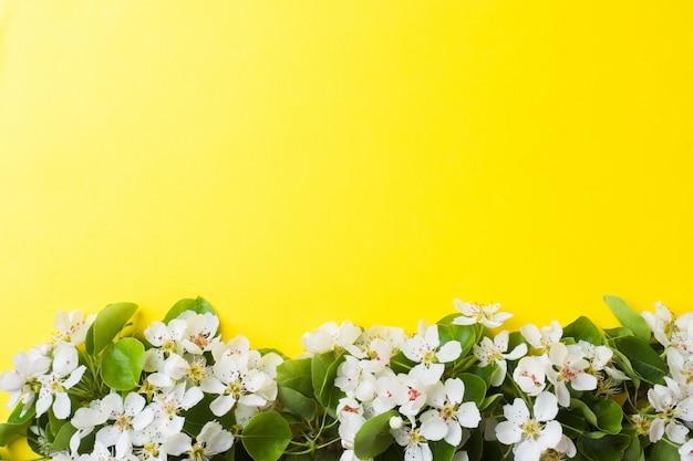 Branche florifère de printemps sur fond jaune