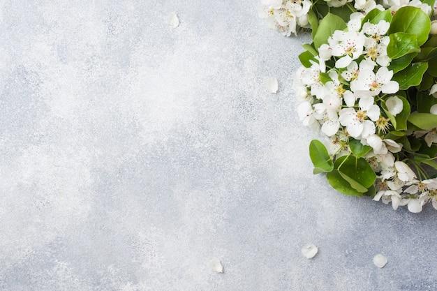 Branche florifère de printemps sur gris
