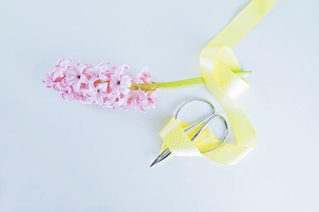 Branche fragile de jacinthe rose décorée de ruban jaune et de ciseaux