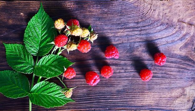 Branche de framboisier aux fruits rouges
