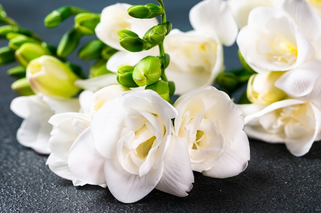 La branche de freesia blanc avec des fleurs et des bourgeons sur une surface sombre. fleurs sur table. fleur de freesia. fleurs de mariage.