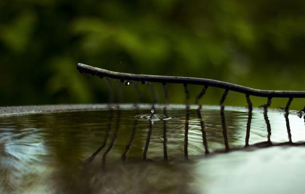 Branche avec des gouttes d'eau