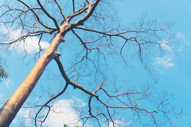 Branche de grand arbre en automne