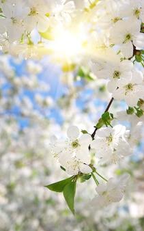 Branche de grand arbre blanc. composition naturelle.